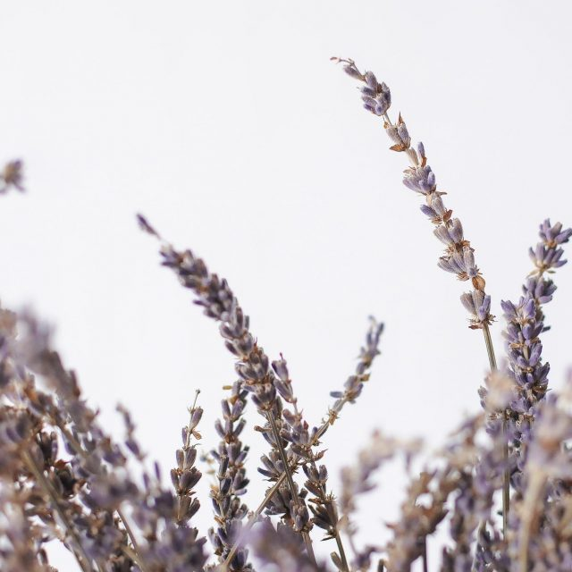 dried lavender 1-2