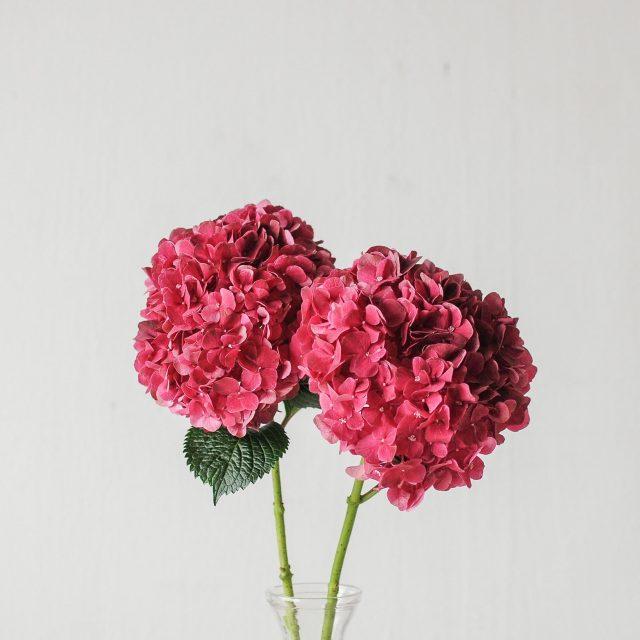 hydrangea - red - 1