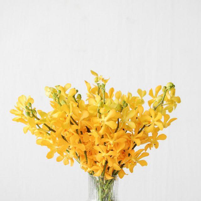 mokara - yellow - 1