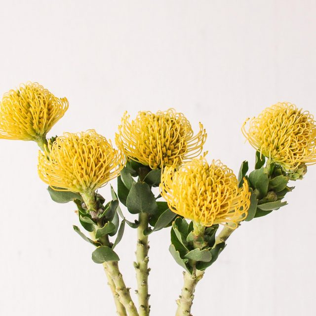 pincushion - yellow - 1