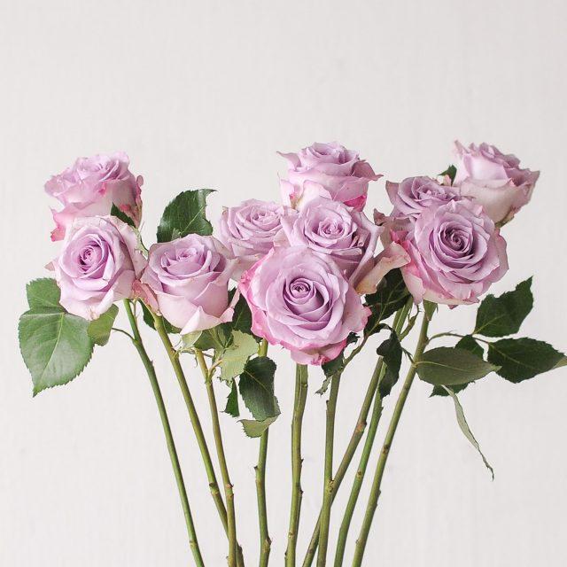 rose - ocean song - 1