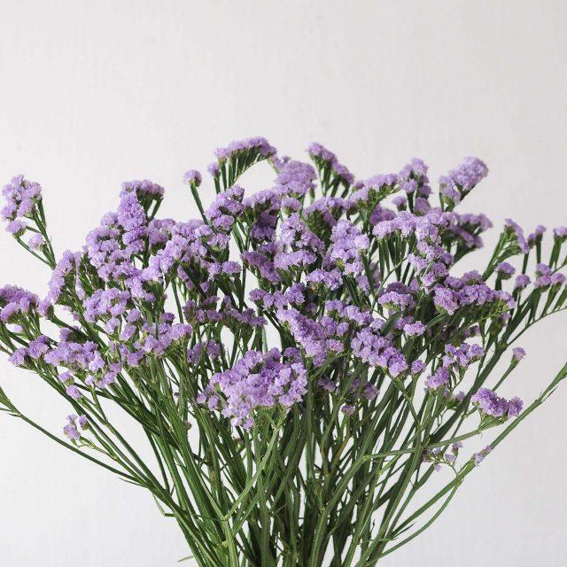 statice - light purple - 1